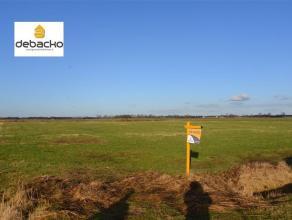 Mooi perceel weiland met een oppervlakte van 22381 m² te Wuustwezel.Dit perceel landbouwgrond heeft een oppervlakte van 22381 m² en is geleg