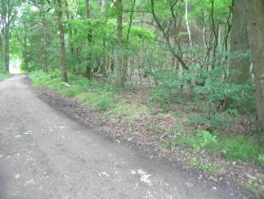 Perceel bosgrond:- perceelsgrootte: 1ha56a90ca- perceelsbreedte: +/- 100 m- perceelsdiepte: +/- 150 m- gelegen op de Monshofstraat, het verlengde van