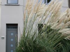 Dit charmante huis is in goede staat en ligt in een rustige en aangename buurt. Op de straat valt het onmiddellijk op dankzij het mooie steppegras in