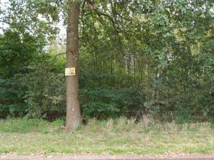 Twee percelen bouwgrond voor telkens halfopen bebouwing te koop in Schoot, deelgemeente van Tessenderlo.Deze loten zijn uiterst rustig gelegen, op wan