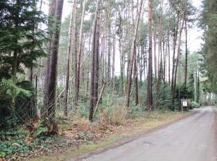 Recreatie grond gelegen in de Schoterse bossen.<br /> De perceels afmetingen zijn +/- 35 meter breed en +/- 30 meter diep waarvan het hoogste punt van