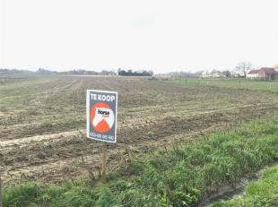 MERCHTEM - Perceel landbouwgrond vrij van pacht op 38a64 !<br /> Zeer goede ligging en makkelijke toegankelijk vanop de straat.<br /> Voor meer inform
