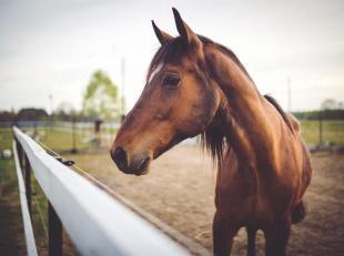 REGIO OOST-VLAANDEREN - DISCREET DOSSIER<br /> Idyllisch gelegen hoeve met professionele paardenaccommodatie (stallen, binnen-en buitenpiste, stapmole