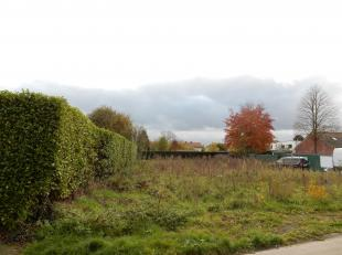 Terrain à vendre                     à 2381 Weelde