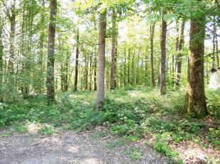 Agréable terrain à bâtir sur 19ares52 dans domaine boisé, situation très calme. Possibilité de construction e