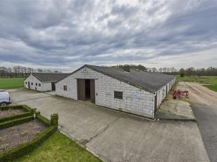 Maison à vendre                     à 3990 Kleine-Brogel