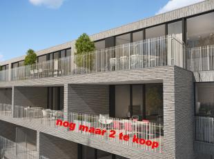 Appartementen te koop in opglabbeek hebbes zimmo