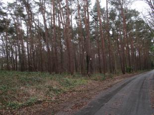 Unieke mogelijkheid van aankoop bouwgrond  63a02 in Keerbergen, bestaande uit twee kavels van een vergunde verkaveling in een bosrijke omgeving. Dicht