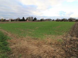 Landbouwgebied ter grootte van 15 a 65 ca, afmetingen: 16 m breedte bij 97 m Lengte.<br /> <br /> Gemakkelijk bereikbaar via de Achterheidestraat, onm