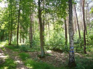 Deze bos  is gelegen t Bocholt/Reppel en heeft een oppervlakte van 98are 90 ca.