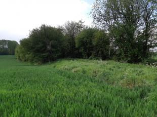 Goed gelegen landbouwgrond met een oppervlakte van 2Ha30are82ca.Het perceel naast de aangeboden grond is eveneens te koop. Dit is een perceel van 4Ha0