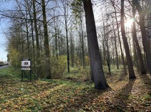 Op een mooie locatie, gelegen op de hoek van de Tweekoningenstraat en de Ooidonkdreef, vinden we dit mooi bos terug. Deze streek is zeer in trek bij w