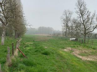 Weiland - 3464 m² - in Gors-Opleeuw (zijwegje van Mellenstraat).<br /> <br /> Vraagprijs : 16.000,00 Euro, exclusief kosten.<br /> <br /> Voor al