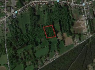 Gemengd bos van 1ha 28a 50ca aan de rand van Beverlo en LeopoldsburgHet betreft 3 aansluitende percelen, gelegen aan de Bandstraat met kadastrale numm