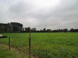Perceel grond gelegen aan de Tongersesteenweg gelegen in landbouwgebied (let op : land- en tuinbouwers, fruittelers mogen hier bouwen mits inachtnemin