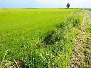 Très belle terre agricole située au sud de Jodoigne, d'une contenance approximative de 1 ha 76 a 16 ca, proche de la rue du Soldat Lariv