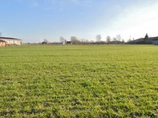 Dit prachtig, in volle natuur gelegen perceel is gelegen tussen Brugge en Knokke en geschikt voor een half open bebouwing...ideaal voor wie houdt van