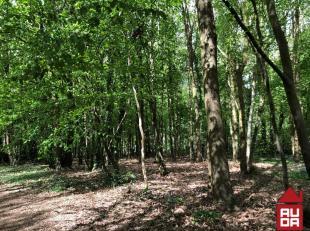 Rechthoekig perceel bosgrond met een oppervlakte van 1.248 m².<br /> Kan NIET als bouwgrond worden gebruikt.<br /> De bosgrond is gelegen aan de