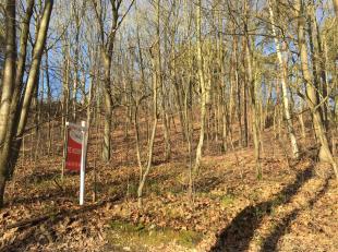 Mooie bouwgrond van 15a60ca. voor open bebouwing, gelegen in rustige en bosrijke omgeving. Goedgekeurde verkaveling (lot 1 van het plan). De terreinbr