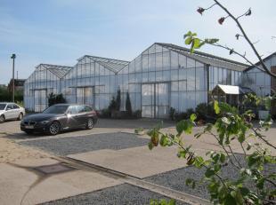 Tuinbouwgrond met bijgaande serres en verkoopruimte + parkeerruimte. Heden gebruikt als detailhandel in planten en bloemen. Diverse mogelijkheden. De