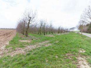 Een perceel landbouwgrond met kersen, oppervlakte: 59a 16ca.<br /> De kersen zijn 13 à 14 jaar oud.