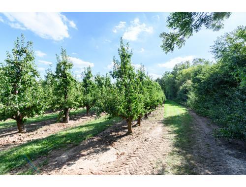 Landbouwgrond te koop in Gingelom, € 5.776