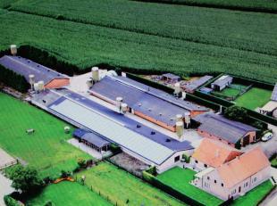 Zeer verzorgd vleesvarkensbedrijf (1370 vleesvarkensplaatsen + ombouw 250 zeugen) te koop te Kasterlee, ook mogelijkheden voor opslag, KMO,.....<br />