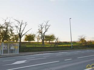 BOUWGROND VOOR OB - CA 12A - MET ZW-TUIN<br /> Deze bouwgrond, voor het bouwen van een open bebouwing,vinden we op de Steenweg (langs nr 22) in Heers