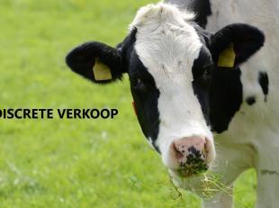 Dit aanbod betreft een zeer verzorgd melkveebedrijf gelegen in de regio Noord-Oost Limburg.<br /> <br /> Dit melkveebedrijf bestaat uit:<br /> <br />