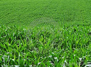 Dit aanbod betreft een perceel landbouwgrond te Oudenaarde:<br /> <br /> Oppervlakte: 65 a 71 ca<br /> Gebruik: akkerland (29 a 05 ca) en weiland (36