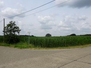 Dit aanbod betreft landbouwgrond gelegen te Westerlo:<br /> <br /> Oppervlakte: 5 ha 57 a 79 ca<br /> Gebruik: akkerland<br /> Bestemming: agrarisch g